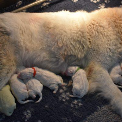 Pups geboren!